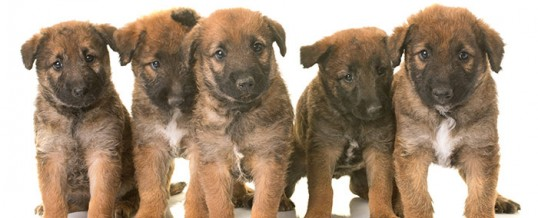 Urgent info for Dog Breeders – Press release issued by HMRC